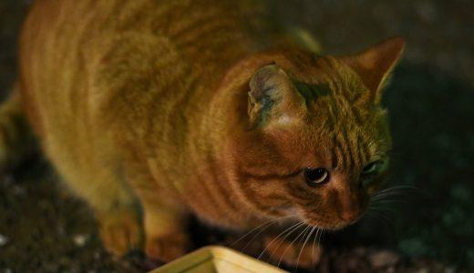 猫サークル ひよねこ